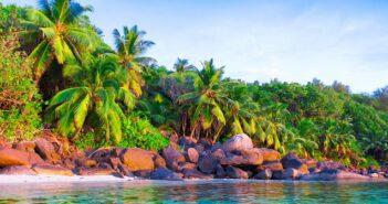 Hawaii- Palme: Ein wunderschoenes Gewaechs