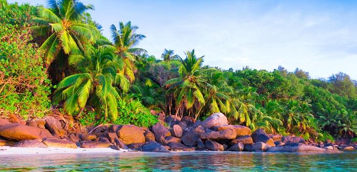 Gemeinsame Hawaii-Palme (Brighamia insignis): Pflege, Überwintern & Vermehren #BG_57