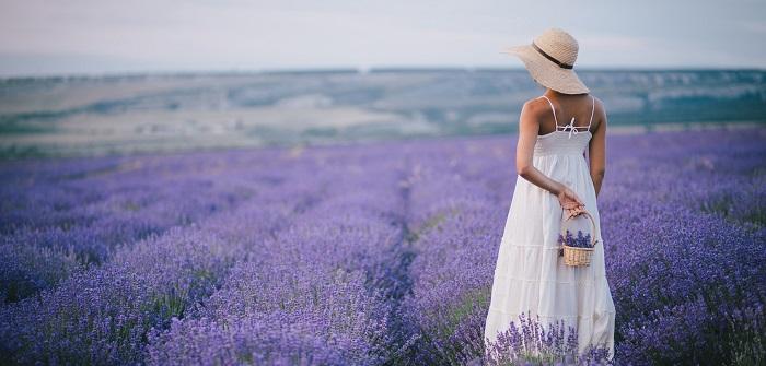 Lavendel, pflegen, schneiden
