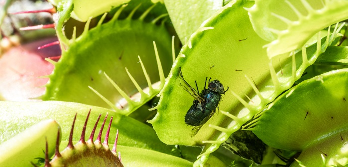 Obstfliegen: Laestige Plagegeister im Sommer