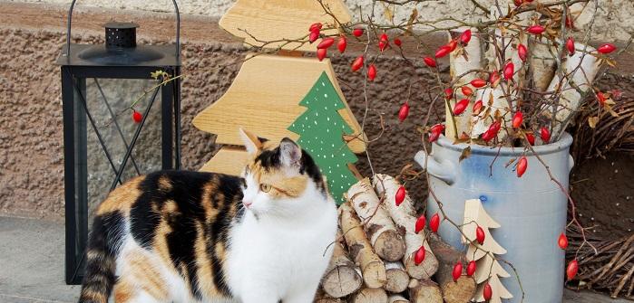 Welche kreativen Ideen mir gekommen sind und wie ich mir eine gemütliche und schöne Weihnachtsdekoration für den Außenbereich vorstelle, möchte ich mit Ihnen teilen.