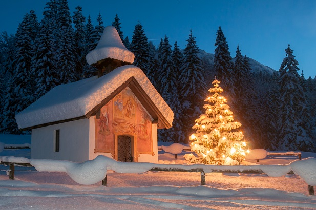 Wenn Sie einen Tannenbaum mit Wurzelballen im Topf kaufen, können Sie ihn nach der Weihnachtszeit in ein Blumenbeet pflanzen und im nächsten Jahr erneut nutzen.