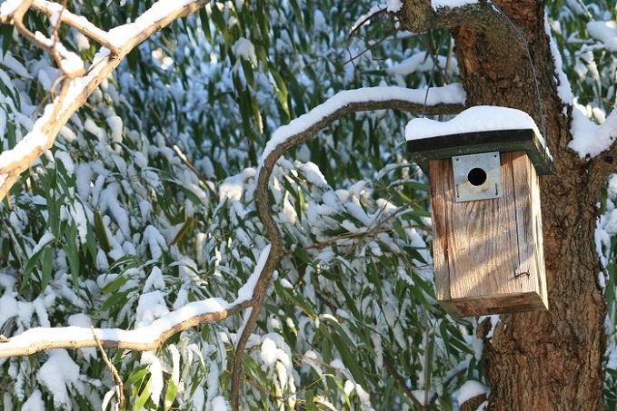 Wer den Garten weihnachtlich dekorieren möchte, der sollte auch einmal an die Vögel denken: Gerade bei Schnee und Frost finden die Piepmatze kein Futter im Freien und profitieren von einer Futterstelle. (#04)