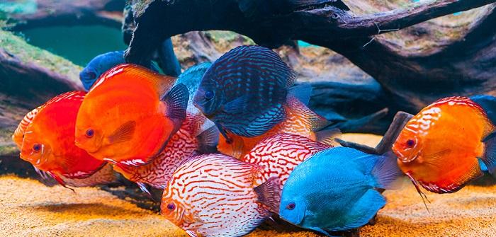 Aquarienfische in Hamburg kaufen – darauf sollte man achten
