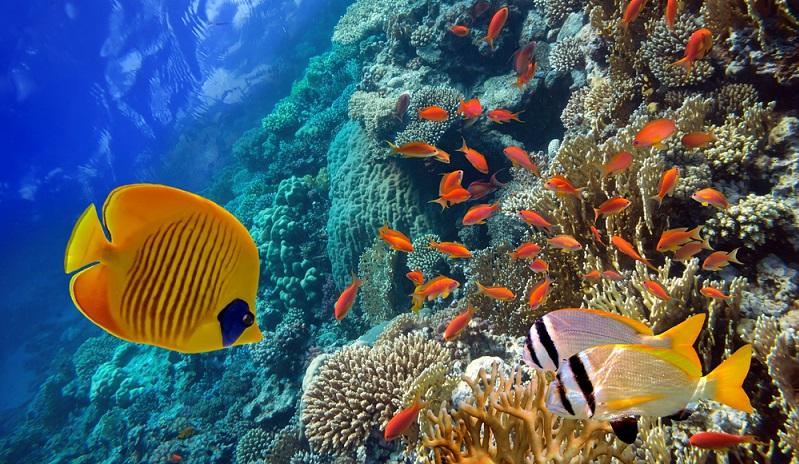 In Bezug auf die technische Ausstattung des Aquariums kommt es in erster Linie darauf an, um welche Art es sich handelt. Ein Süßwasseraquarium ist in der Regel etwas einfacher einzurichten und zu pflegen als ein Meerwasseraquarium. (#02)