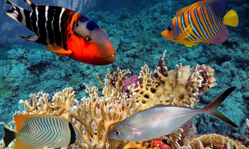Wer mit dem Gedanken spielt, Aquarienfische in Hamburg zu kaufen, sollte einige Dinge beachten, bevor er sich ein Aquarium und die dazugehörigen Fische anschafft. (#01