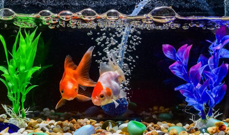 Eine sehr gute Maßnahme, die sogar noch einigen weiteren Nutzen bringt, ist das Aufstellen eines Aquariums. (#04)