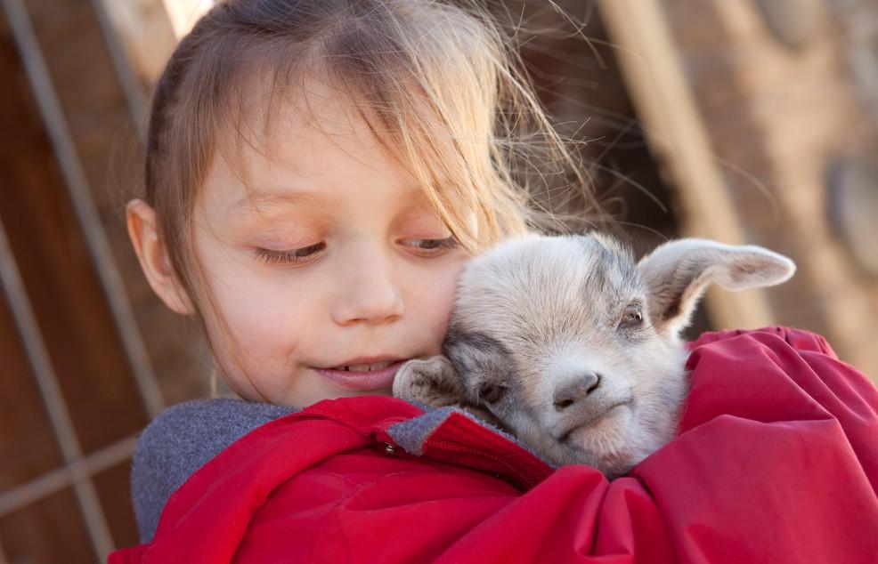 Der Naturpark von Cervia ist für Kinder eine wahre Freude. Wie auf dem Bild zu sehen, kann hier im Streichelzoo so manche Ziege verhätschelt werden. Die Tiere sind das gewohnt und die Kinder haben ihren Spaß. Der Naturpark von Cervia/Italien liegt nur etwas über einen Kilometer von Milano Marittima entfernt. (#2)