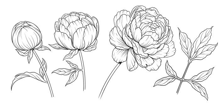 Zeichnen für Anfänger: Mit diesen Tipps gelingen erste Zeichnungen