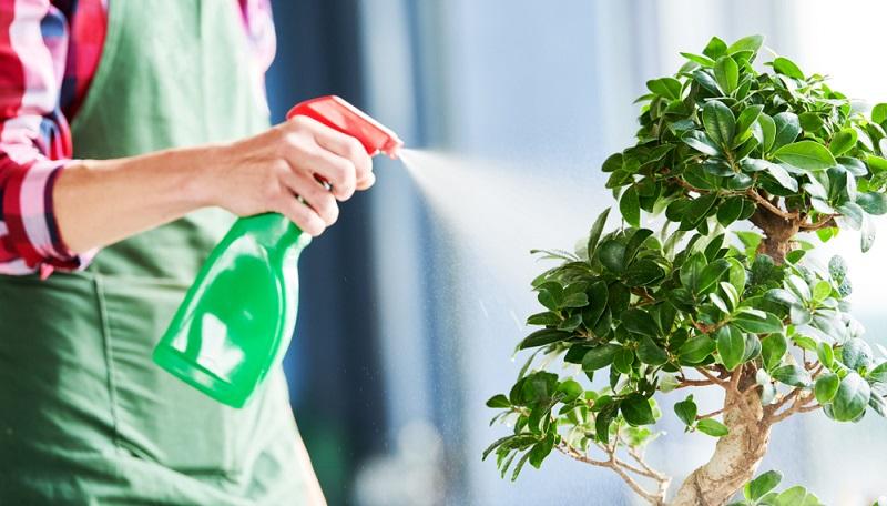 Bonsai Bewässerung durch Besprühen ist die traditionelle Form. Allerdings ist das sehr zeitintensiv.
