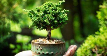 Bonsai schneiden: 5 Tricks, die man kennen muss!