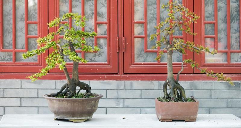 Die SOKAN Gestaltungsform: Aus einer Wurzel wächst ein doppelter Stamm.