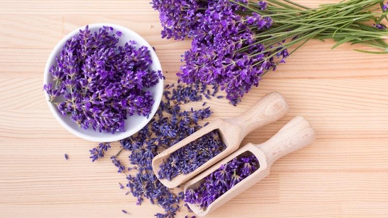 Getrockneter Lavendel in kleine Beutel verpackt, kann man direkt zu den Nahrungsmitteln legen, um die Lebensmittelmotte zu vertreiben.