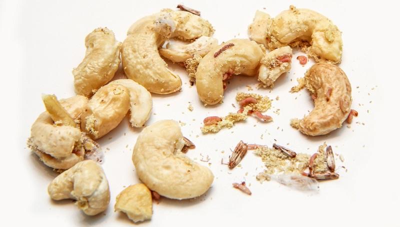 Cashewkerne mit Beilage? Lebensmittelmotten mitessen will mit Sicherheit kein Mensch. (#01)