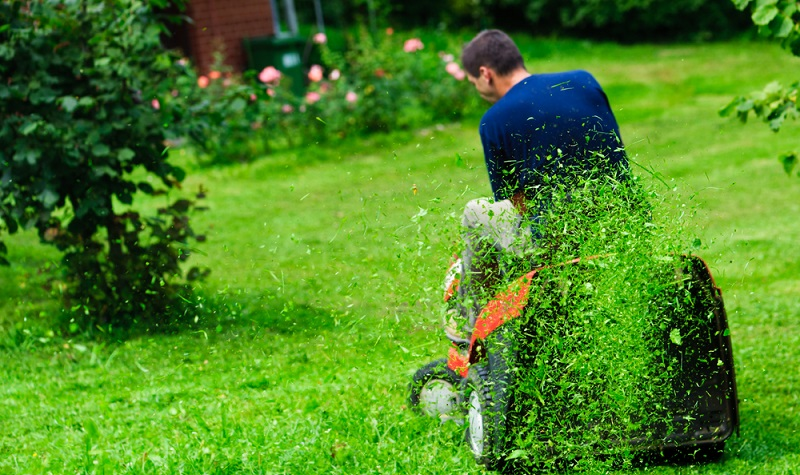 Natürlich gehört die Rasenpflege auch auf die Liste der Gartenarbeiten im Frühjahr ( Foto: Shutterstock-Evgeniya Moroz )