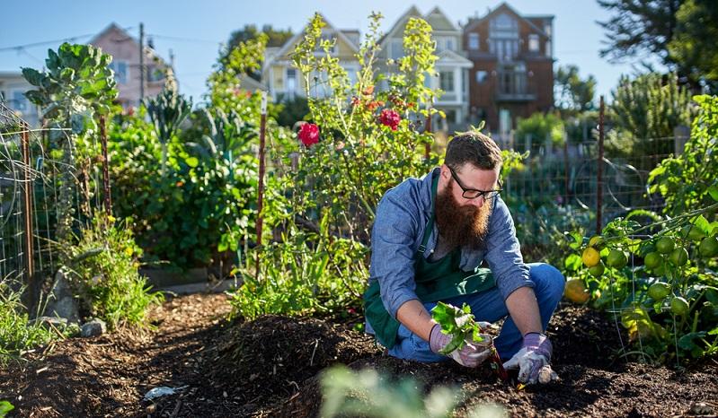 Im Frühjahr wird der Boden im Garten vorbereitet, außerdem können die ersten Gemüsepflanzen gesetzt werden. ( Foto: Shutterstock-oshua Resnick  )
